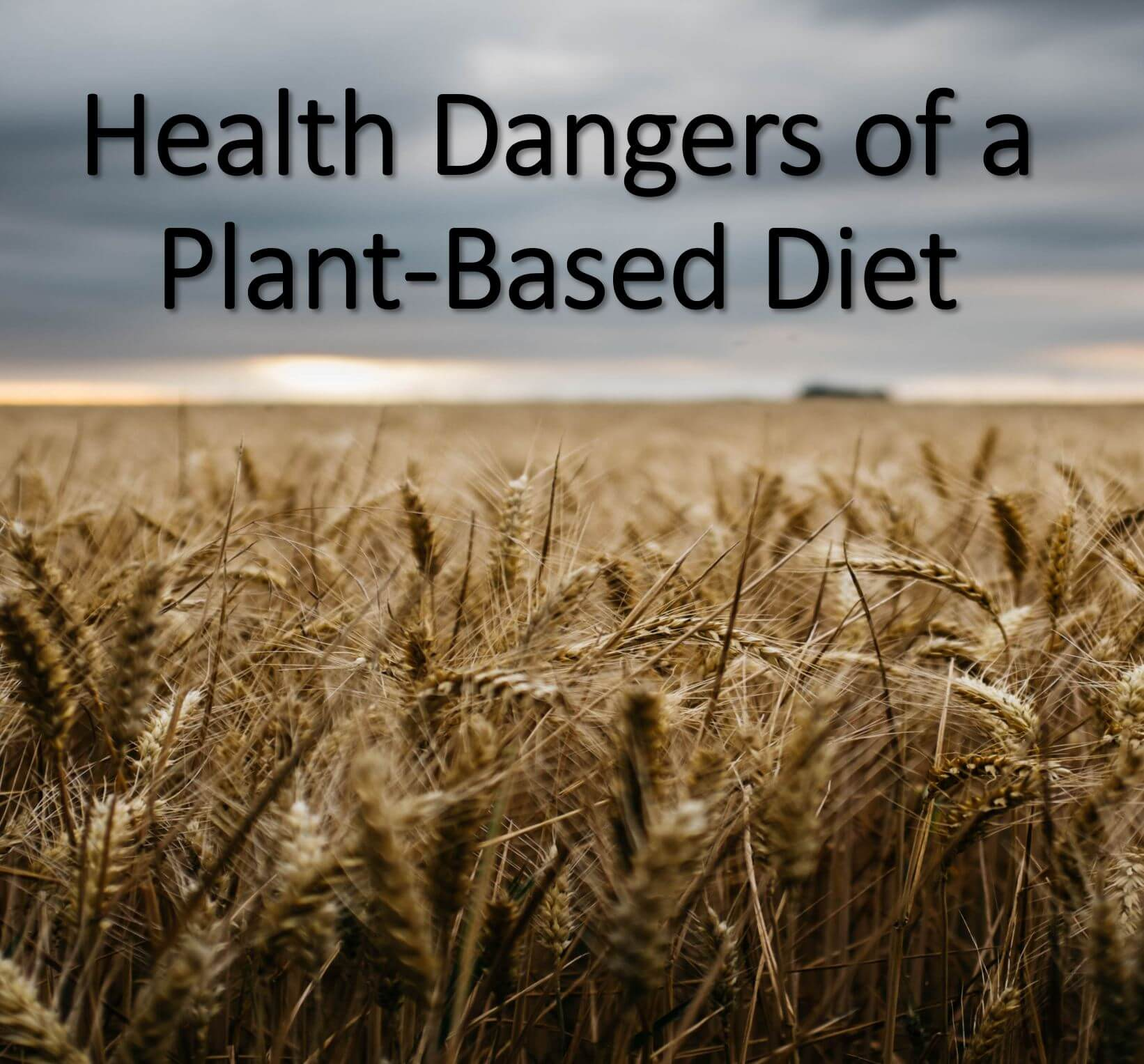 the problem with a plant based diet