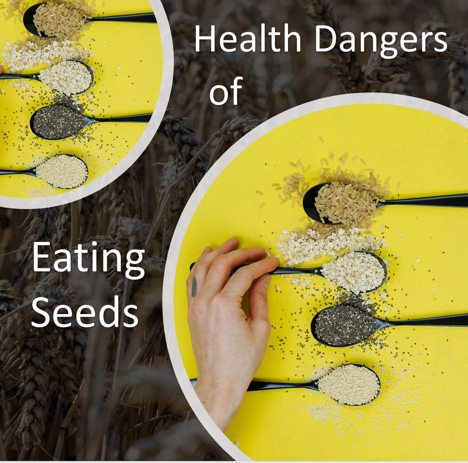 Health Dangers of Eating Seeds | Kevin Stock