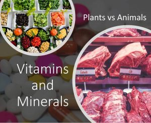 vitamins and minerals - plants vs animals