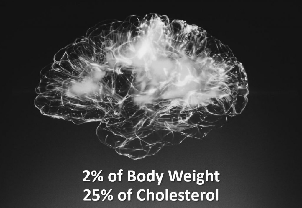 Cholesterol and the Carnivore Diet Brain Cholesterol