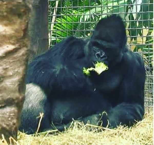 Low Carb Gorillas