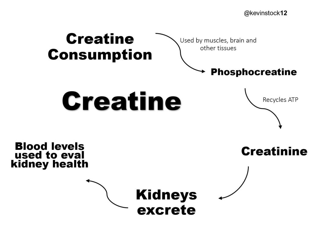 Creatine and Kidneys